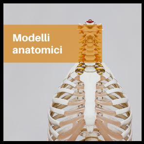 modelli-anatomici